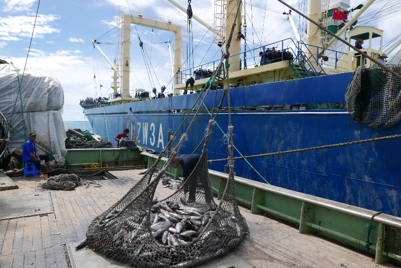 Transparency in International Fisheries