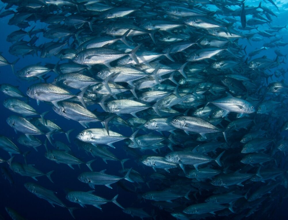 Seafood Sector Can Benefit from Fisheries Transparency