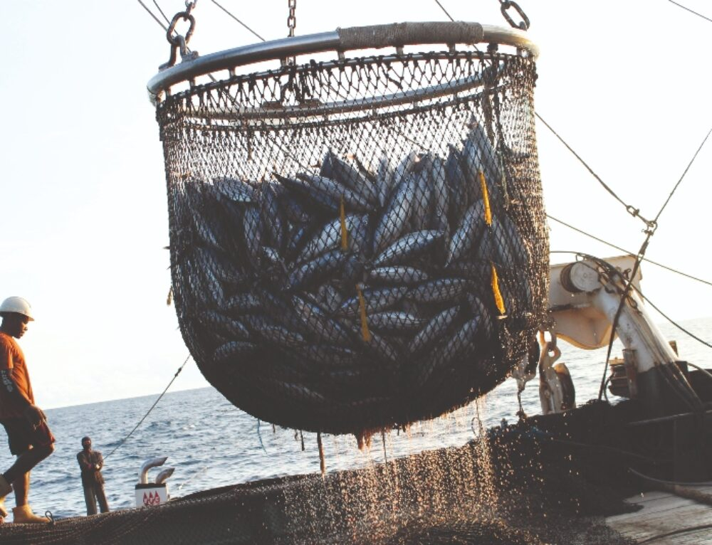 Life Below Water: Ensuring Legal Seafood Starts with Supporting Fisheries Workers