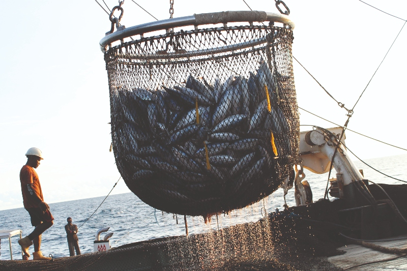 A scoop is used to haul tons of tuna onto the deck of the purse seine fishing boat