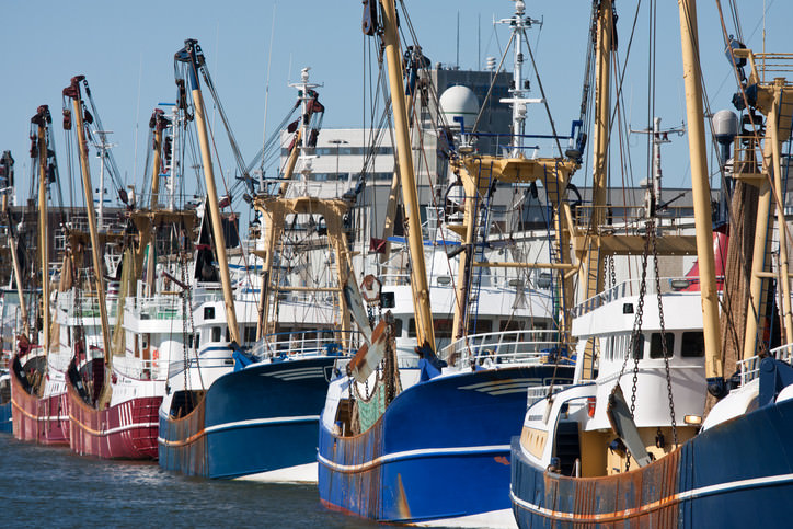 Fishing Vessels in Port