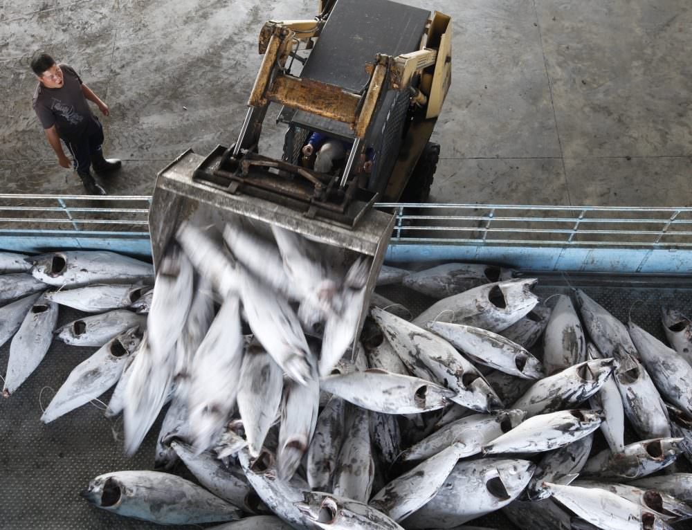 Partnering to Improve Seafood Traceability
