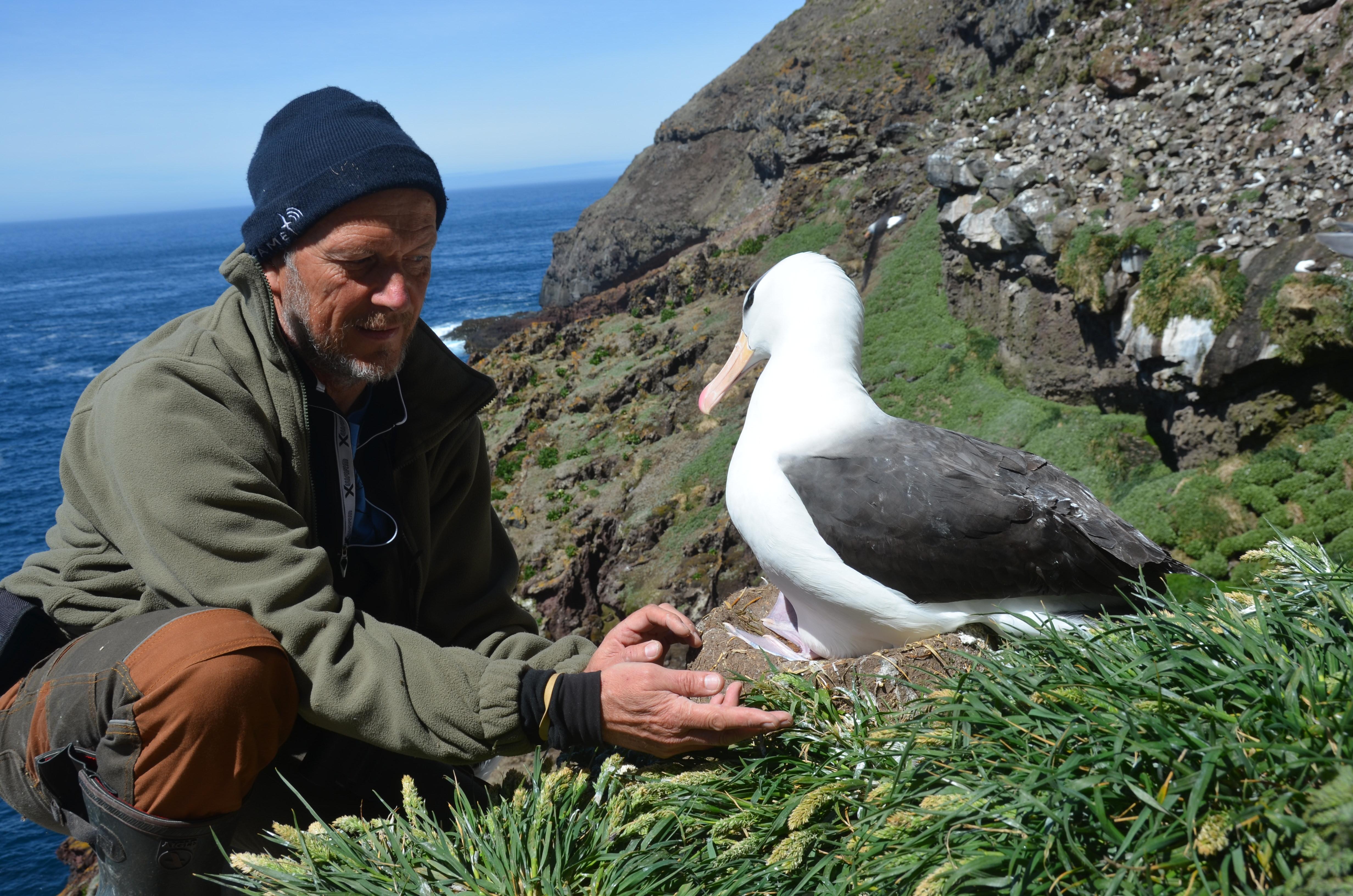 Henri Weimerskirch with a brown-browed Albatross on Kerguelen Island in the south western indian océan. Photo: Henri Weimerskirch