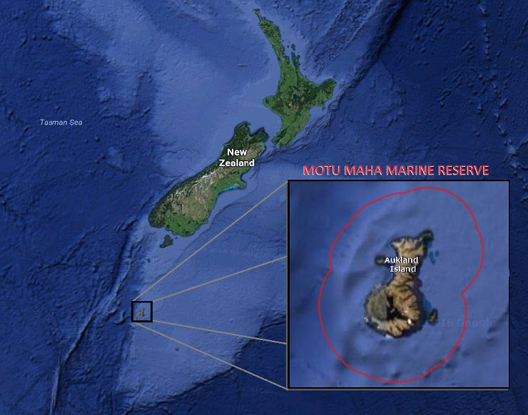 Motu Maha Marine Reserve surrounds a remote cluster of islands 285 miles from the southern tip of New Zealand.