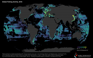 Global Fishing Activity