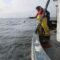 New Horizons for Peru's Squid Fishery