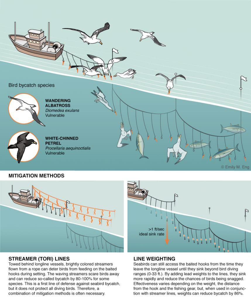 Longline seabird bycath