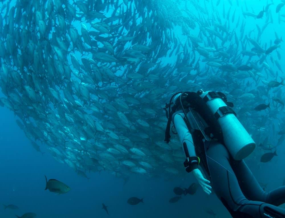 Tackling Unknowns to Advance Ocean Sustainability