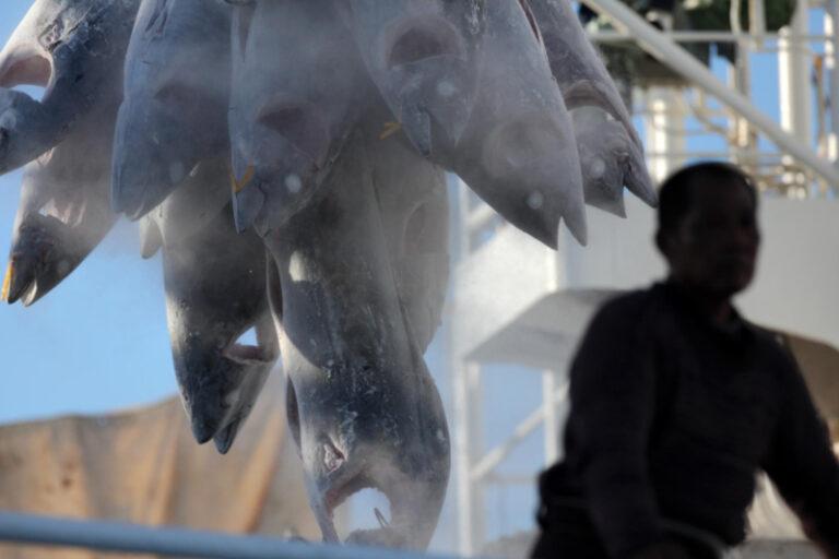 Tuna transshipment in the Indian Ocean