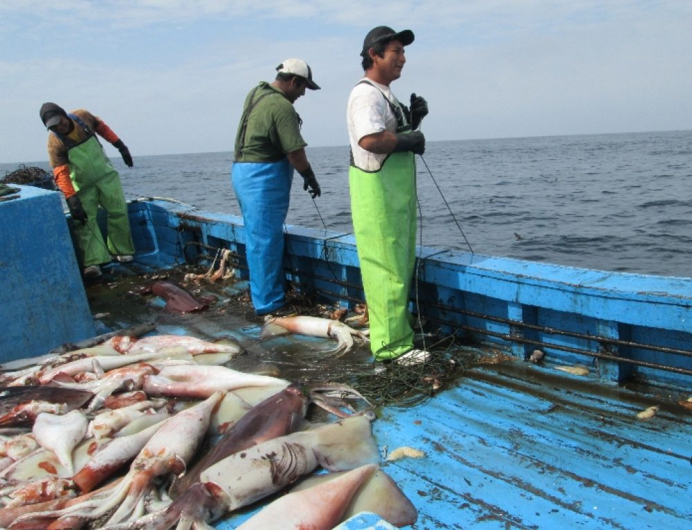 Perú expande su sistema de seguimiento de embarcaciones para mostrar la actividad se dos grandes pesquerías artesanales