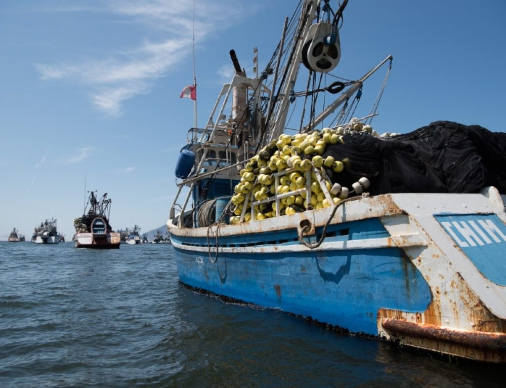 Peruvian Fisheries Experience Massive Decline in Activity from COVID-19