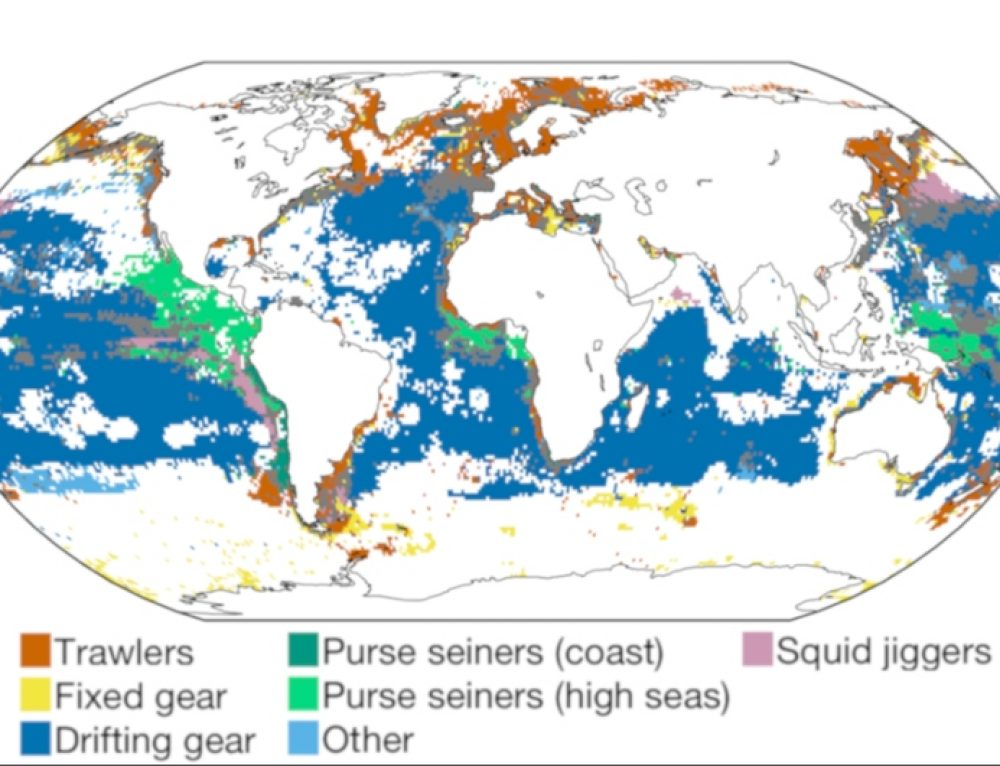 Rhythms of the wild in global fisheries data