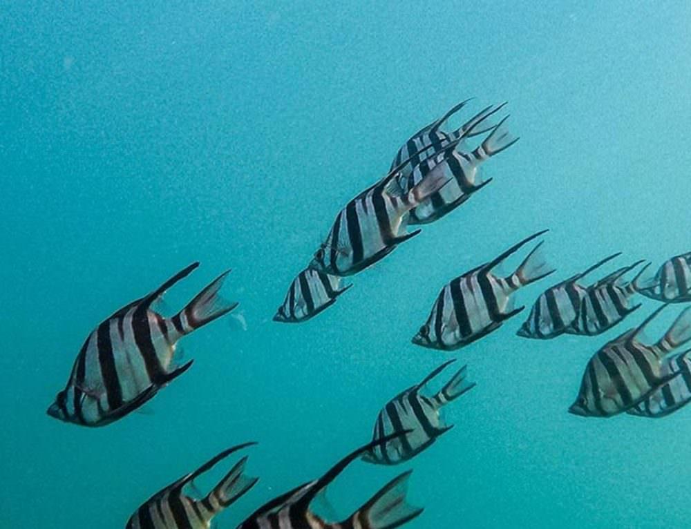 Rastrear la pesca desde el espacio: La huella mundial de la pesca industrial al descubierto
