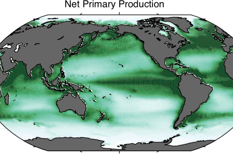Net Primary Production