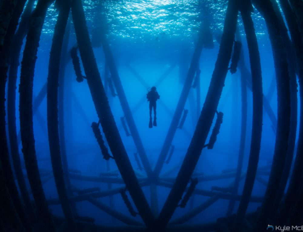 Oil rigs alive: marine life abounds in unlikely places