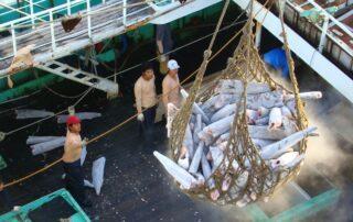 tuna transshipment operation