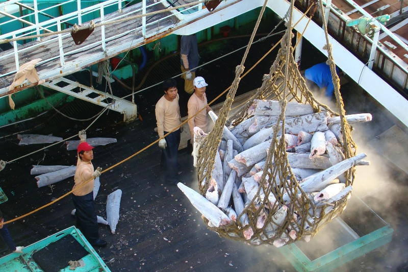 tuna transshipment operation